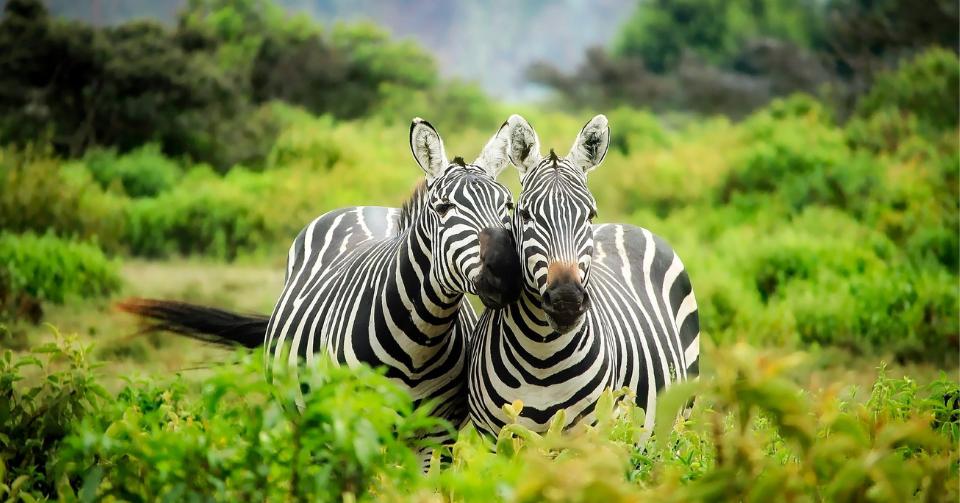 Kenya removes quarantine for UK travellers
